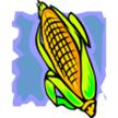 corn_cob