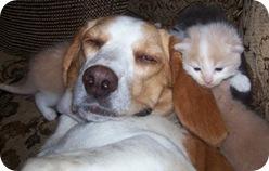 leomon4_kittens_july_19_2009