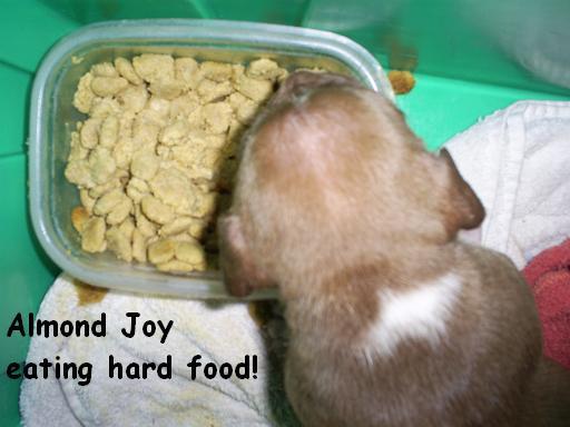 almondeatinghardfood2