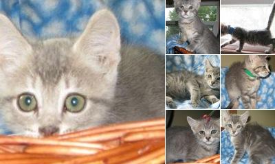 View Kryder Kittens June 8th