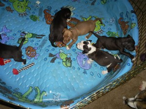 puppy_play_pen_090509