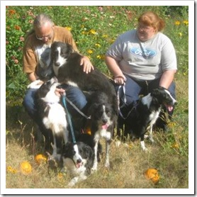 five_border_collies2_sept_27_2009