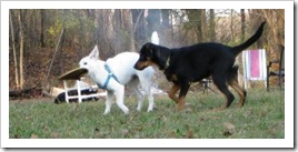 white_dog_quinton_play5_nov_8_2009