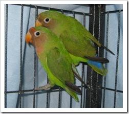lovebirds2_nov_18_2009