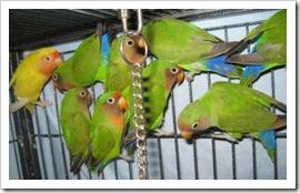 lovebirds3_nov_18_2009