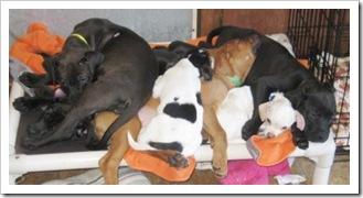 puppy_pile_on_kuranda_bed_feb_18_2010sm