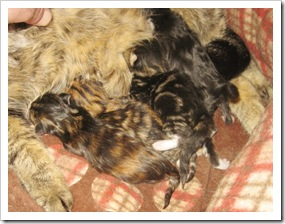 secora_and_kittens7_feb_25_2010sm