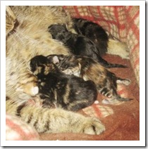 secora_and_kittens8_feb_25_2010