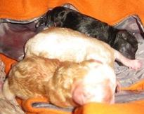 fabian_newborn_pups7_march_13_2010