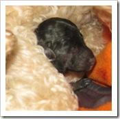 fabian_newborn_pups8_march_13_2010