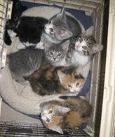 seven_kittens_jan_26_2008