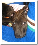 tinker_adoption_event_feb_27_2010