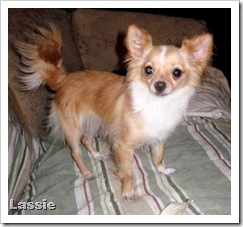 little_lassie_may_24_2010
