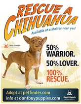 rescue_chihuahua_poster