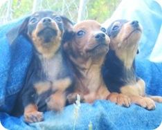 triodoxie_pup_trio_may_19_2010sm2