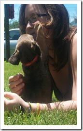 Puppies 046