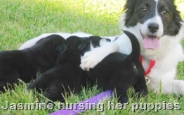 jasmine_nursing_pup2_june_3_2010