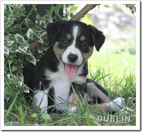 dublin_aug7_2010