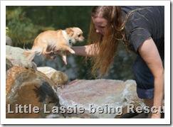 little_lassie5d_aug_7_2010sm