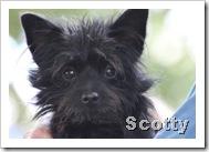 scotty_celtic_fest_sept_5_2010sm