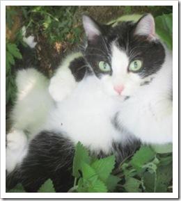 sidney_catnip2_may_4_2010