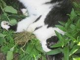 sidney_catnip3_may_4_2010