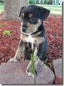 Dingo_6_2010
