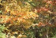 fall_oct_10_2010