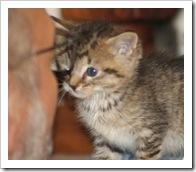 04_03_2011Sebrina Tingley4223