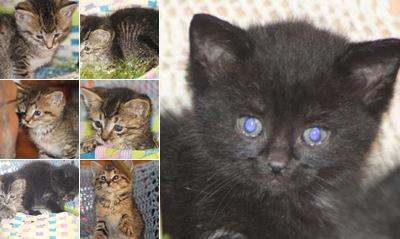 View Orphan kittens April 3 2011