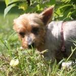 08_24_2011Sebrina Tingley9681