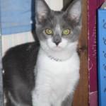 09_12_2011Sebrina Tingley9999_31
