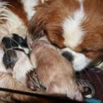 pups_born_born_november_27_2011 (11)