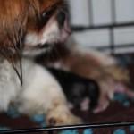 pups_born_november_27_2011 (8)