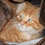 january_2_2011cats 009