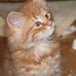 orange_kitty10_december_1_2011
