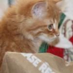 orange_kitty12_december_1_2011