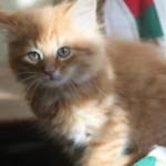 orange_kitty2_december_1_2011