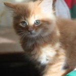orange_kitty3_december_1_2011
