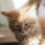 orange_kitty4_december_1_2011