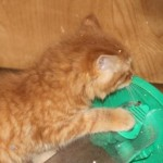orange_kitty6_december_1_2011
