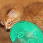 orange_kitty8_december_1_2011