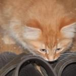 orange_kitty9_december_1_2011