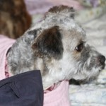 lucy_january_16_2012 (3)