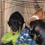 poohbear_piper_december_24_2011 012 (1)