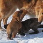 pups_libby_January_5_2012 053sm