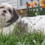 poochie_april_3_2012 (13)