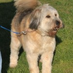toby_march_30_2012 (2)