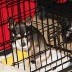 scrunch_crate_rest_may_23_2012 (9)