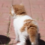 garvey_ may_10_2012 (1)